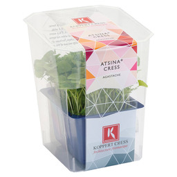 ATSINA CRESS SINGLE BOX