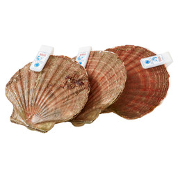 SCALLOPS NORWEGIAN LARGE SOAKED