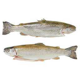 HOLLANDSE FOREL SMALLERT 250-350GR