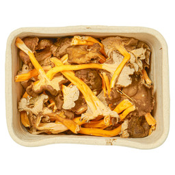 YELLOW CHANTERELLE