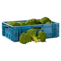 BROCCOLI HOLLAND