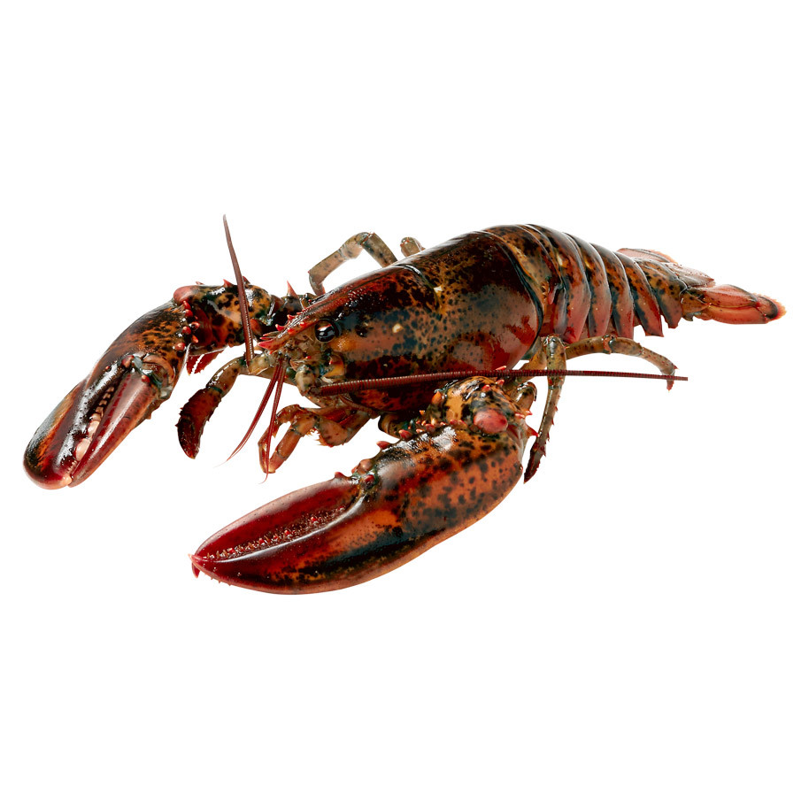 LOBSTER 200/400 CANADA CANNERS