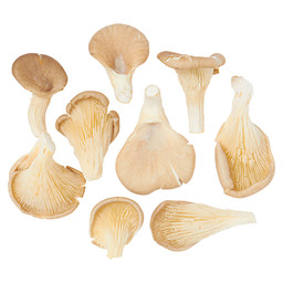 PLEUROTTES DUTCH OYSTER MUSHROOMS