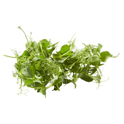 AFFILLA CRESS FOLIE