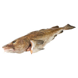 COD WHOLE WITH HEAD