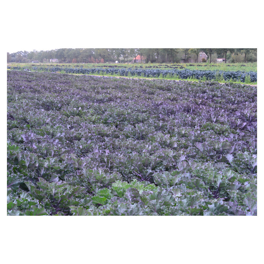 FLOWERSPROUTS