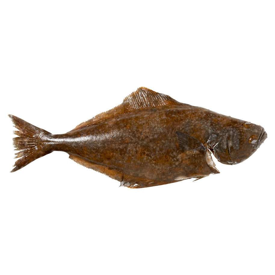 HALIBUT CULTIVATED 2/3 WITH HEAD