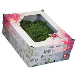 AFFILLA CRESS FOIL - CASE VEGETABLES